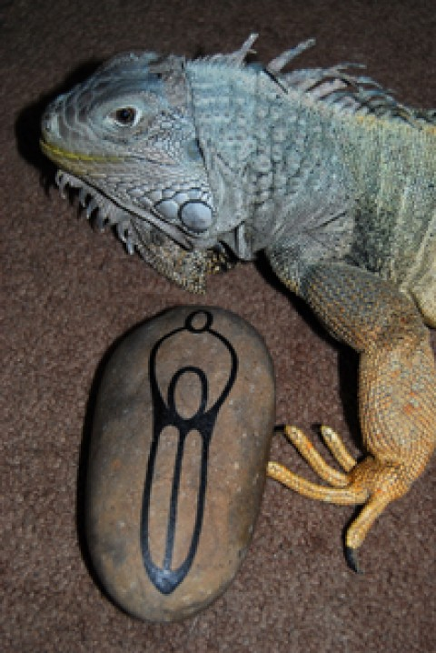 iguana girl- bad