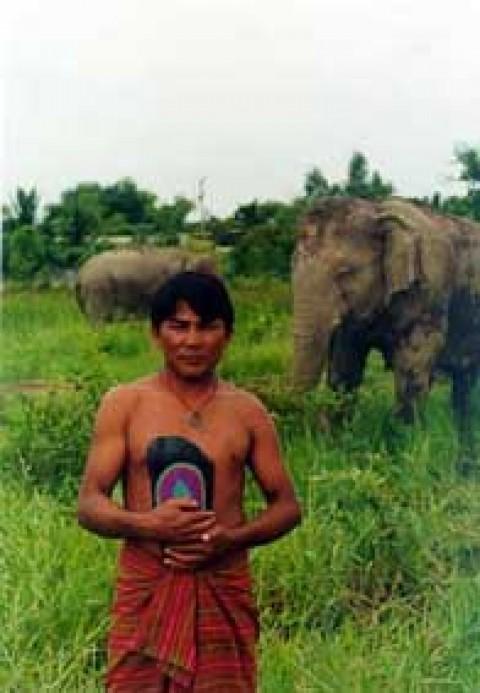 elefant thai